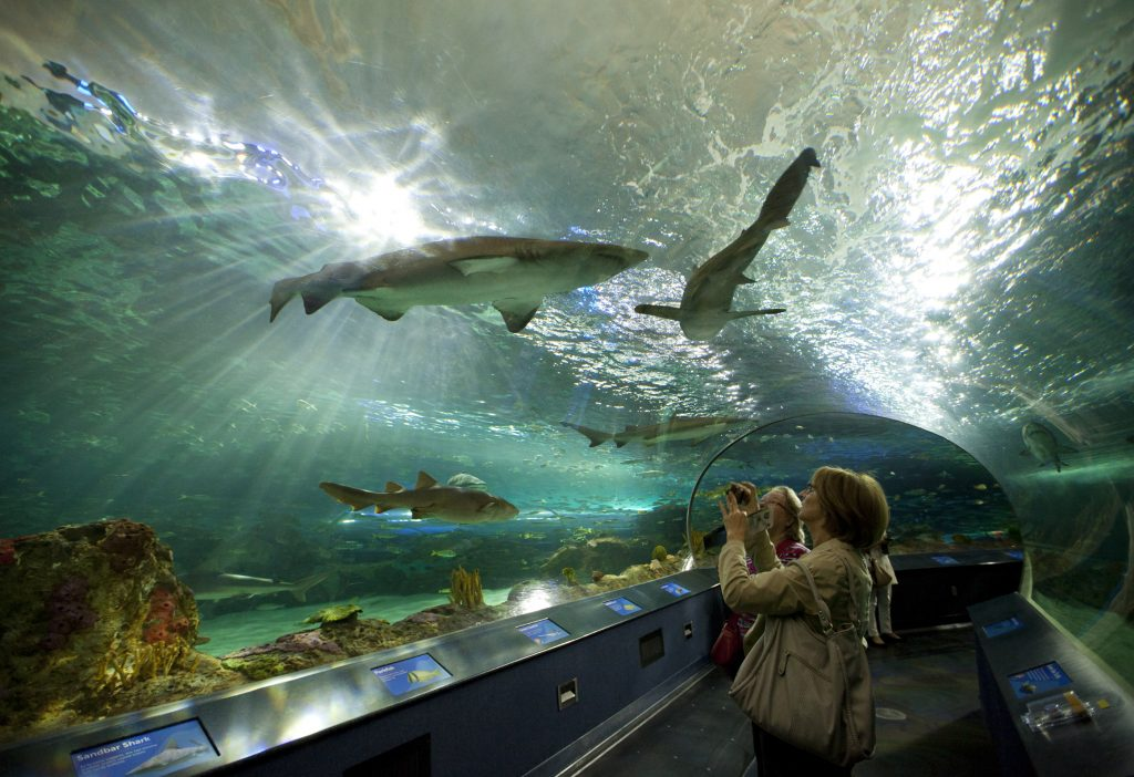 Toronto Ripley's Aquarium shark tank, GoRoamin travel blog