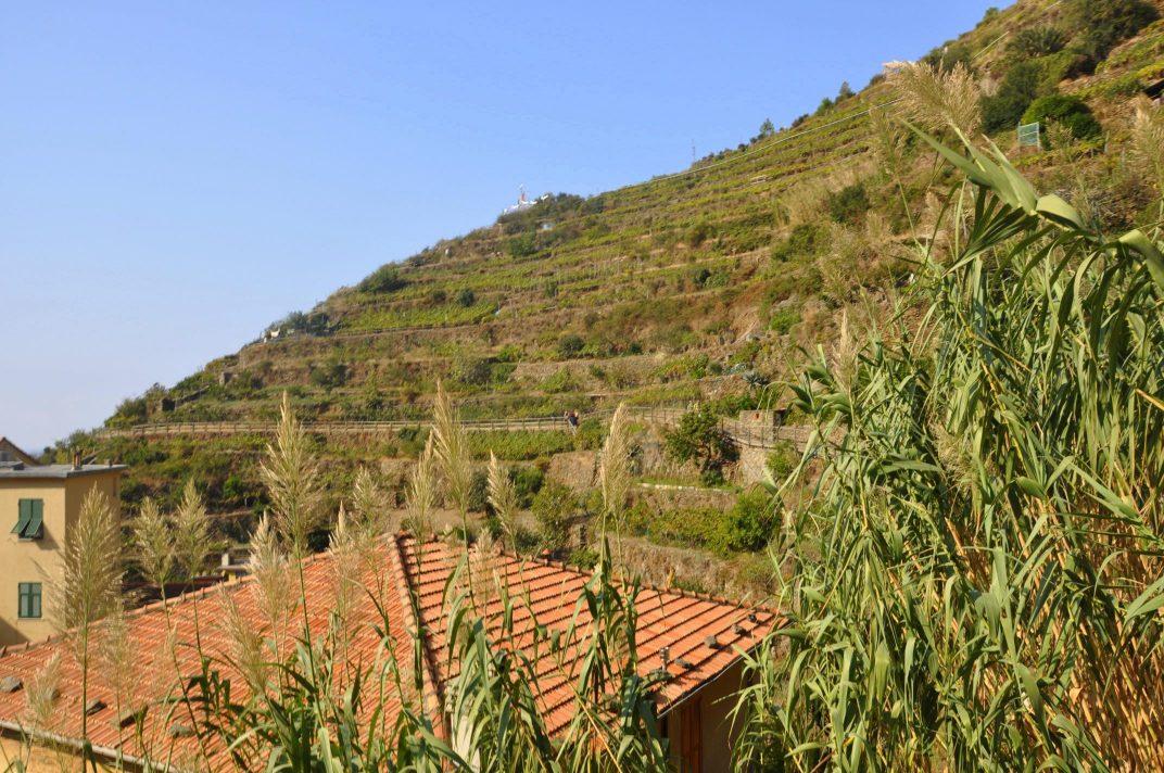 Cinque Terre Vineyards, GoRoamin Travel Blog