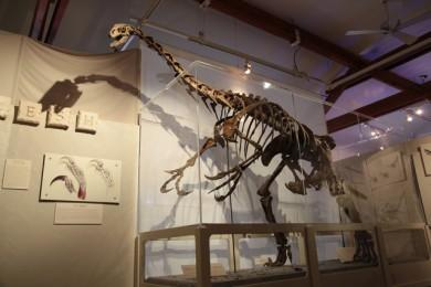 Flagstaff Museum, Therizinosaur GoRoamin Travel blog