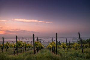 Arizona Wine Country, GoRoamin Travel Blog